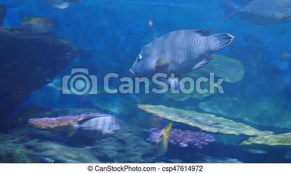 Beautiful exotic see fish in an aquarium. Underwater Scene - csp47614972
