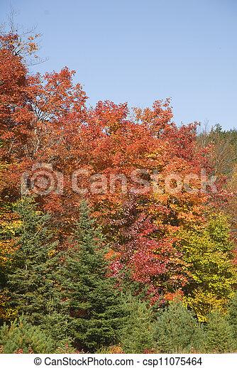 beautiful fall colors - csp11075464