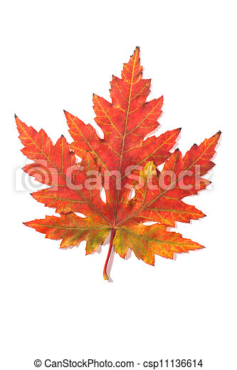 Beautiful fall leaf - csp11136614