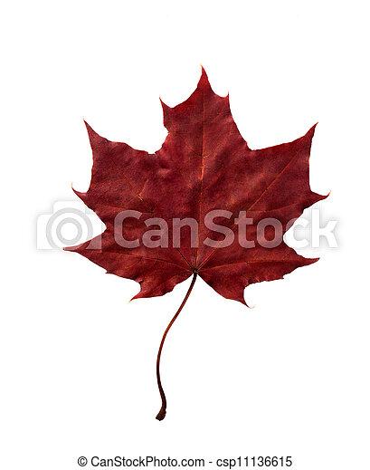Beautiful fall leaf - csp11136615