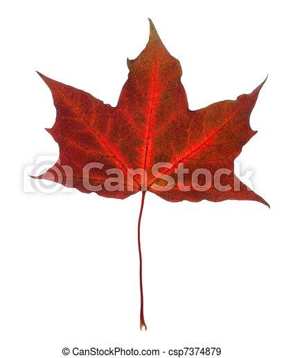 Beautiful fall leaf - csp7374879