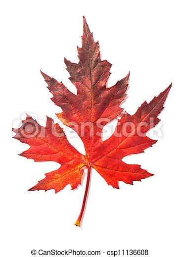 Beautiful fall leaf - csp11136608