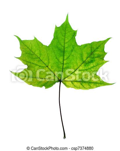 Beautiful fall leaf - csp7374880