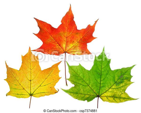Beautiful fall leafs - csp7374881
