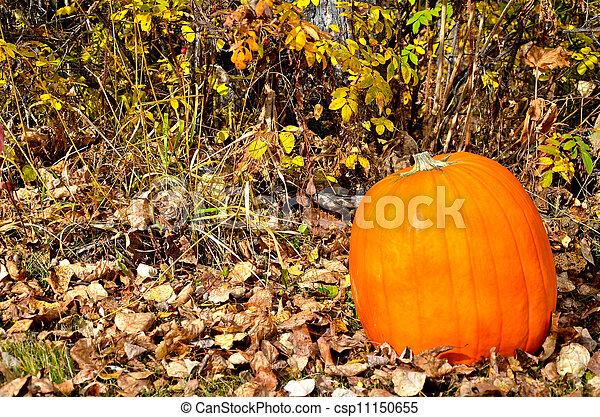Beautiful Fall pumpkin - csp11150655