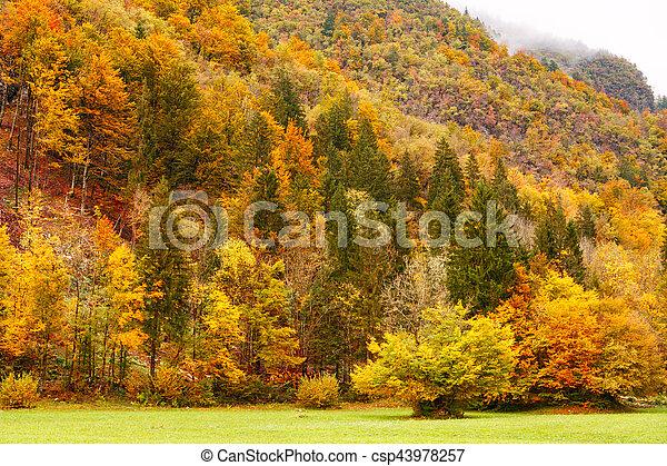 Beautiful fall scene - csp43978257