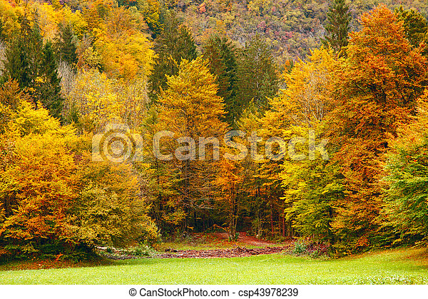 Beautiful fall scene - csp43978239