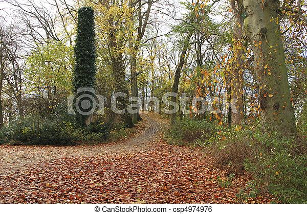 beautiful fall - csp4974976
