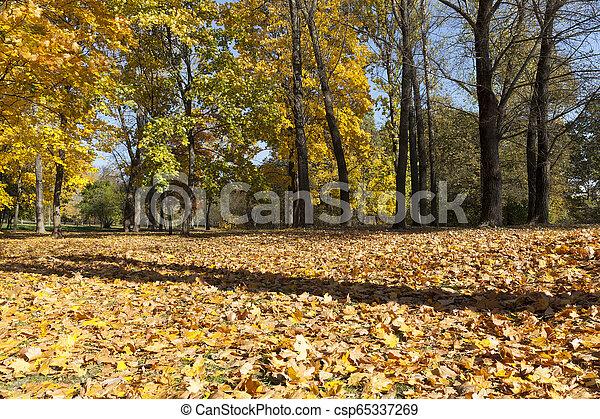 beautiful fall - csp65337269