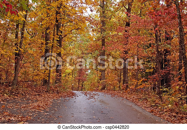 Beautiful fall - csp0442820