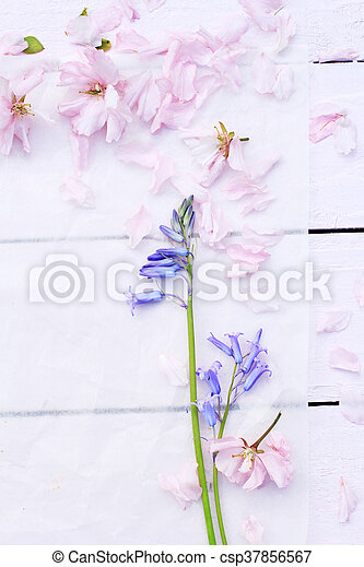 Beautiful floral background with Spring flowers - csp37856567