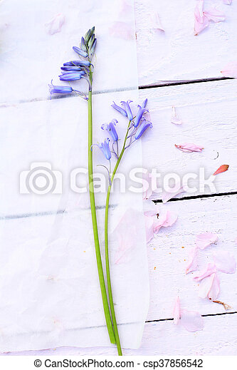 Beautiful floral background with Spring flowers - csp37856542