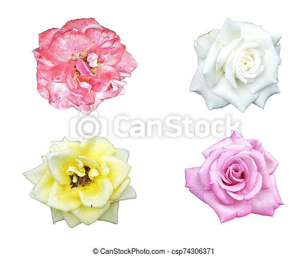 beautiful flower isolated on white background - csp74306371