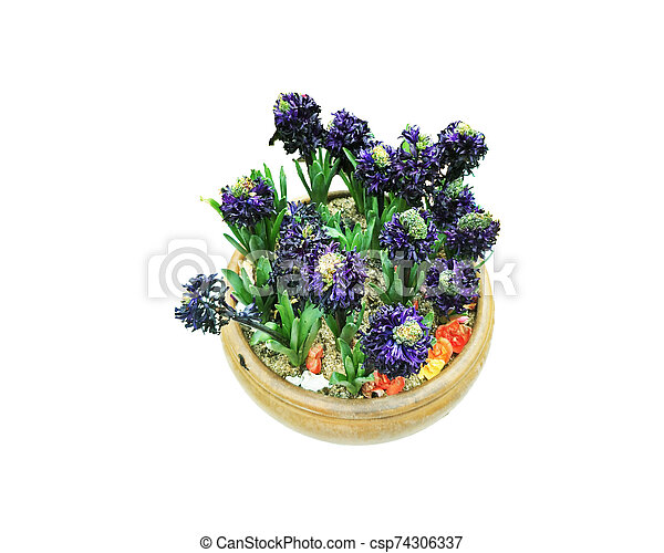beautiful flower isolated on white background - csp74306337