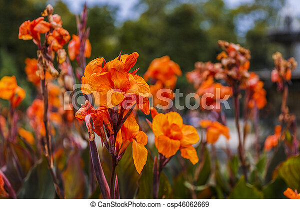 beautiful flowers in the park - csp46062669