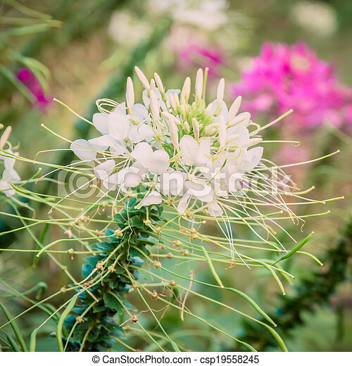 Beautiful flowers in the park. - csp19558245