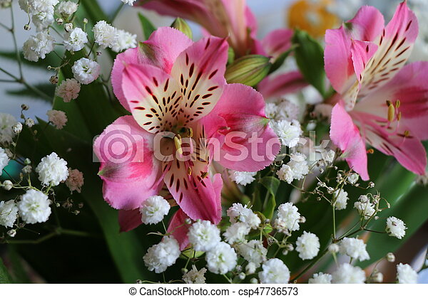 Beautiful Flowers Of Peruvian Lily Alstroemeria Plant Pink With Yellow Throat