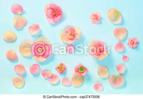 Beautiful flowers on a blue background - csp37473506