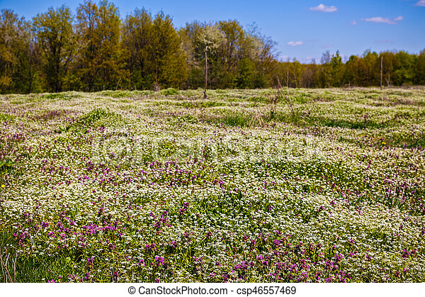 beautiful flowers on a meadow in spring forest - csp46557469