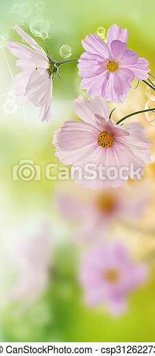 Beautiful flowers on abstract  spring nature background - csp31262273