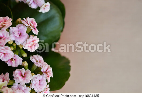 Beautiful flowers on brown background - csp16631435