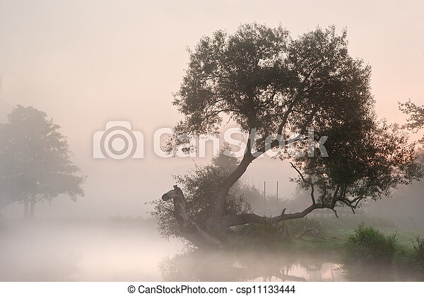 Beautiful foggy sunrise landscape over river with trees and sunb - csp11133444