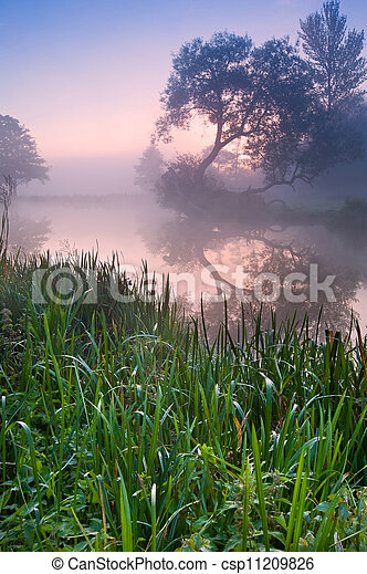 Beautiful foggy sunrise landscape over river with trees and sunb - csp11209826
