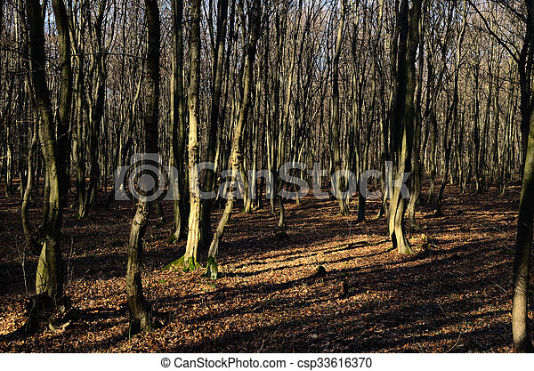 beautiful forest and leaves in winter - csp33616370
