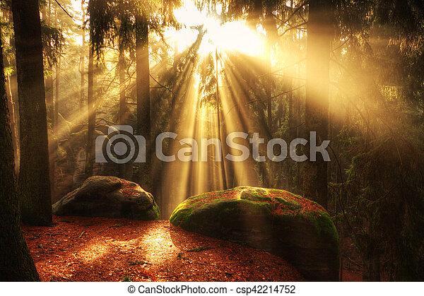 beautiful forest and sunbeams - csp42214752