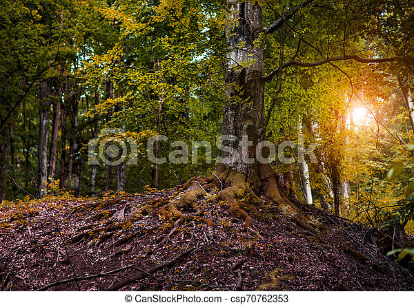 Beautiful forest in the rays of the sun. - csp70762353