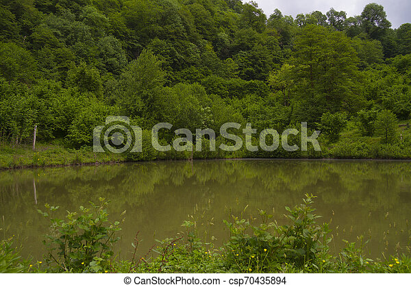 Beautiful forest like in summer time - csp70435894