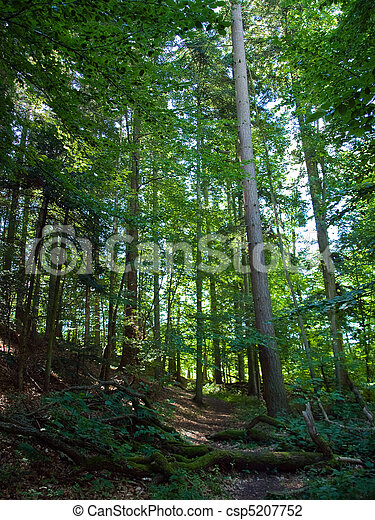 Beautiful Forest Vertical Background Beautiful Fairy Forest With