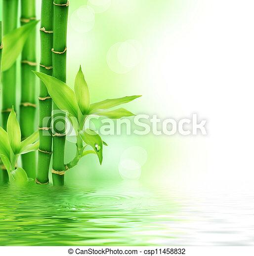 Beautiful Fresh Bamboo  - csp11458832