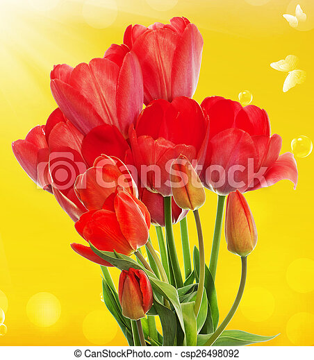 Beautiful fresh garden tulips on abstract spring nature backgr - csp26498092