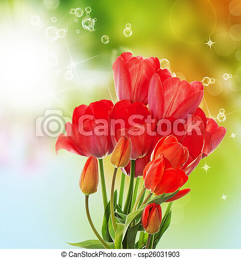 Beautiful fresh garden tulips on abstract spring nature backgr - csp26031903