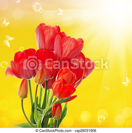 Beautiful fresh garden tulips on abstract spring nature backgr - csp26031906