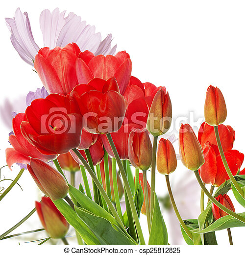Beautiful fresh red tulips on abstract spring nature background - csp25812825