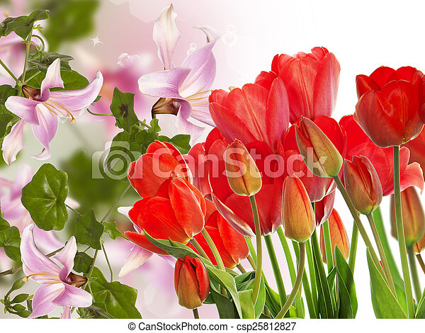 Beautiful fresh red tulips on abstract spring nature background - csp25812827