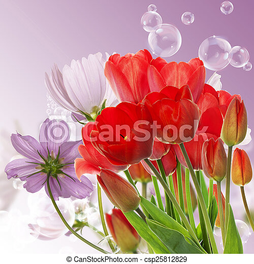 Beautiful fresh red tulips on abstract spring nature background - csp25812829