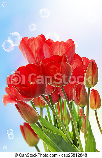 Beautiful fresh red tulips on abstract spring nature background - csp25812848