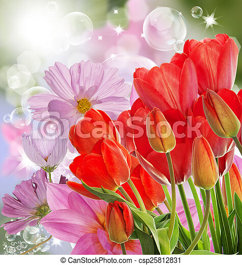 Beautiful fresh red tulips on abstract spring nature background - csp25812831