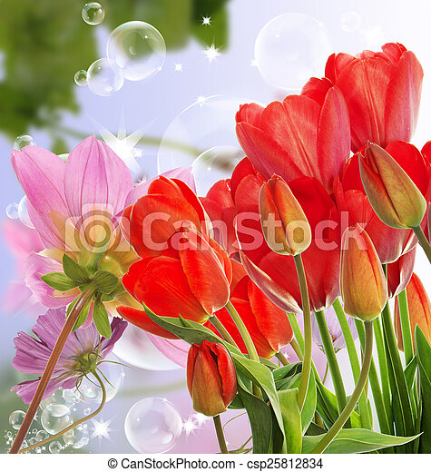 Beautiful fresh red tulips on abstract spring nature background - csp25812834