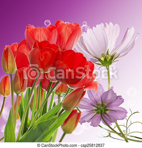 Beautiful fresh red tulips on abstract spring nature background - csp25812837