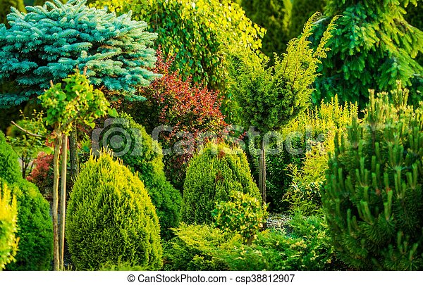 Beautiful Garden Closeup - csp38812907