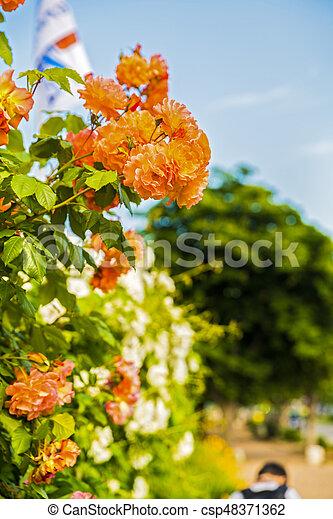 Beautiful garden flowers in the park - csp48371362