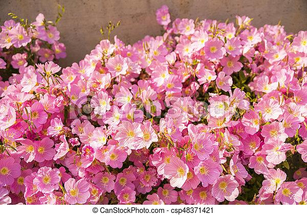 Beautiful garden flowers in the park - csp48371421