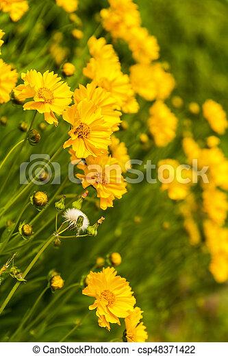 Beautiful garden flowers in the park - csp48371422
