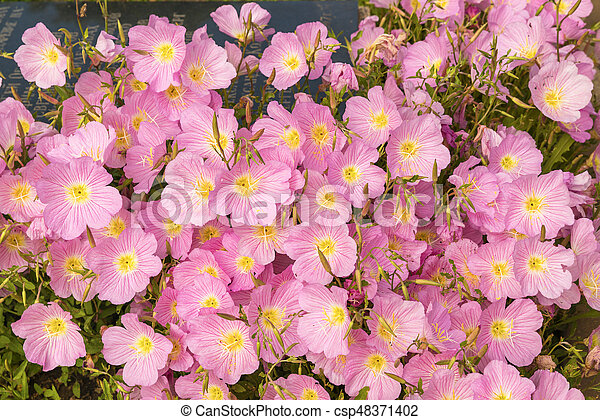 Beautiful garden flowers in the park - csp48371402