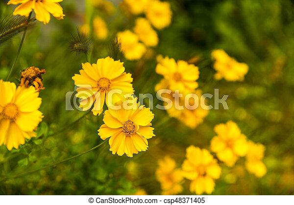 Beautiful garden flowers in the park - csp48371405