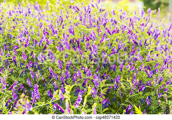 Beautiful garden flowers in the park - csp48371433